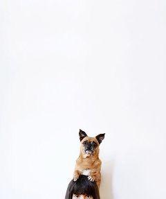 freetoedit dog pet
