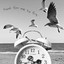 freetoedit myedit seagullsinflight timeremix