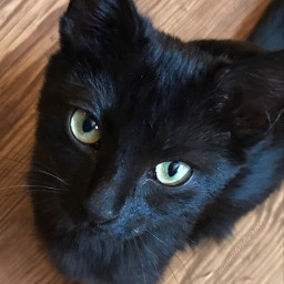 dpcfridaythe13th mypet fumathepuma black cat