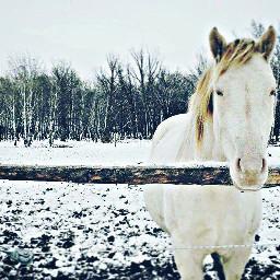 freetoedit animals horse