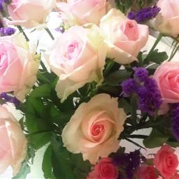freetoedit flowersandroses