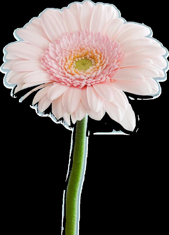 #FreeToEdit #flower #ftestickers