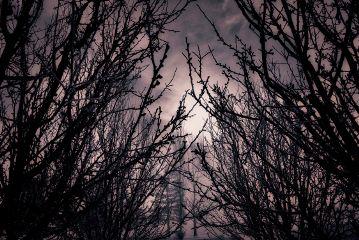 angeleyesimages landscapephotography landscape coloredit trees
