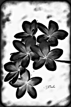 freetoedit flowers artwork bnwedit