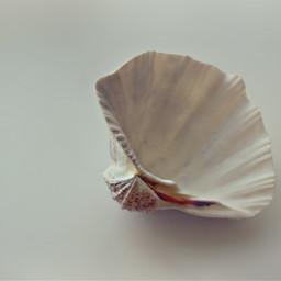 nature seatreasures shell keepitsimple minimalphotography