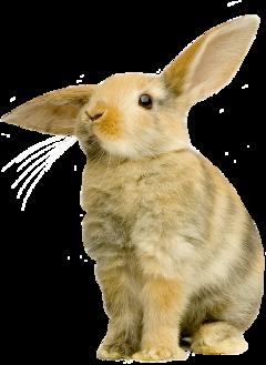 #ftestickers freetoedit bunny bunnystickers easter ftestickers
