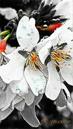 flowers flowerphotography flowerart flowerful