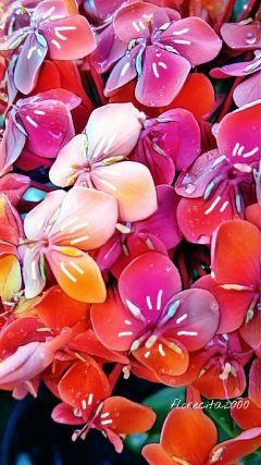 wappatternsonplants flowers myphoto
