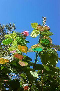 freetoedit wappatternsonplants photography drawing edit