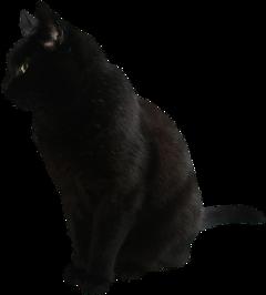 cat blackcat goth black cute freetoedit