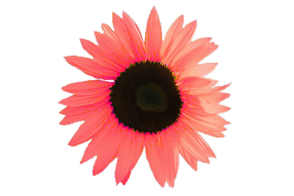 #freetoedit #flower #flores