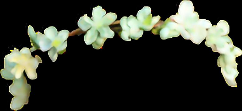 #tumbrl #flower #flowers #crown#FreeToEdit