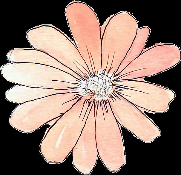 Výsledek obrázku pro flower drawing png