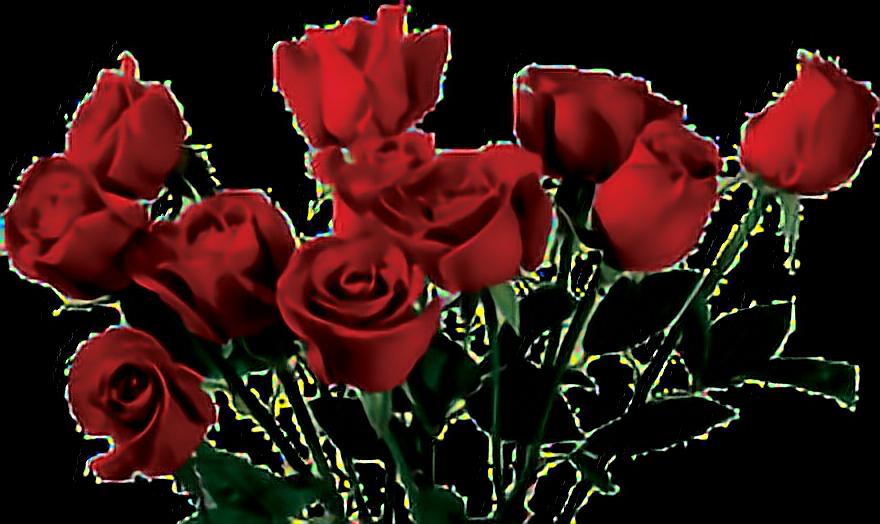 #розы