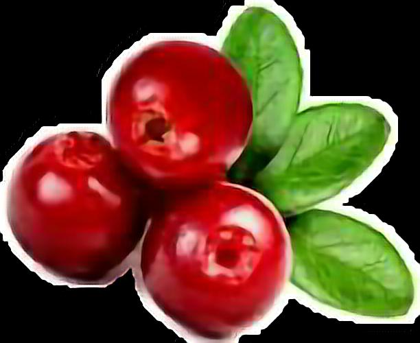 #cramberries #red #berries