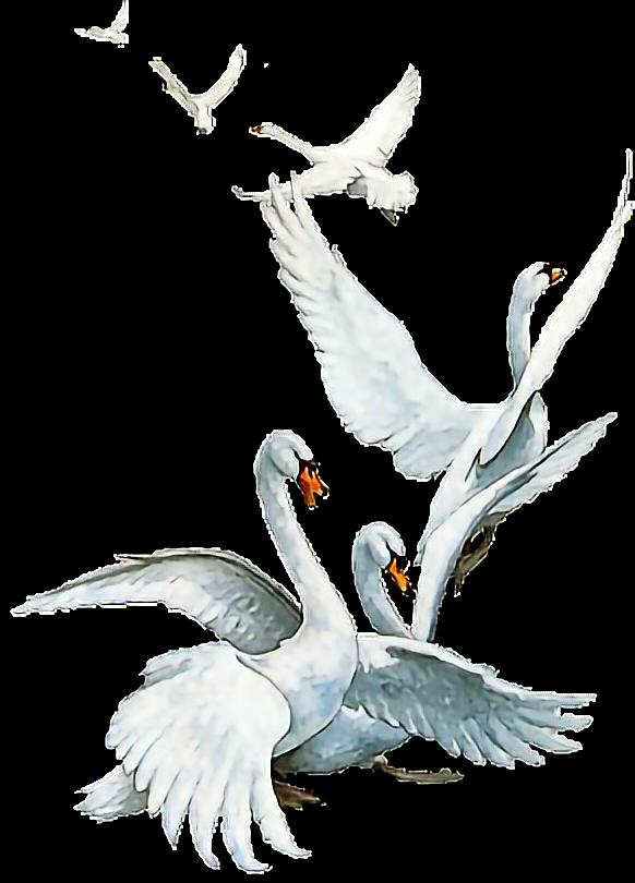 Картинка анимация гуси и лебеди