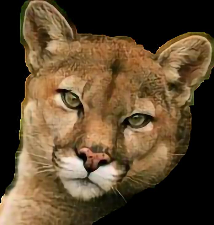 Cougar Mountainlion Sticker By Taliafera