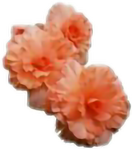 Edit Flores Naranja Sticker By Oncemimo