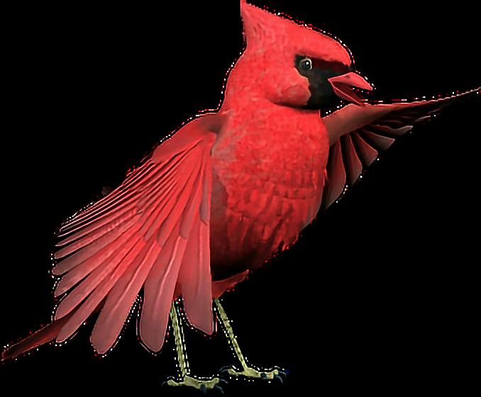 #cardinal #bird