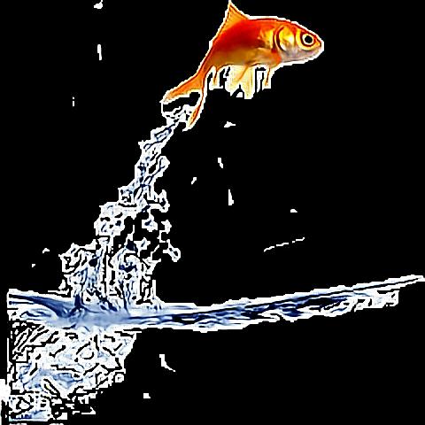 #fish#water