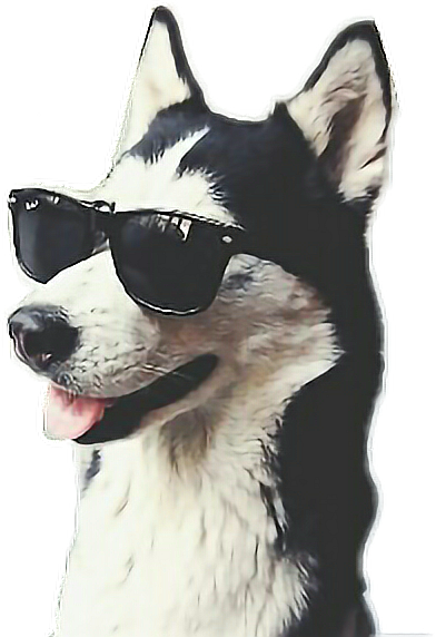 #husky #cool